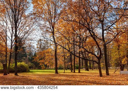 A Beautiful Quiet Autumn Park Without People With Tall Trees With Bright Golden Foliage And Empty Be