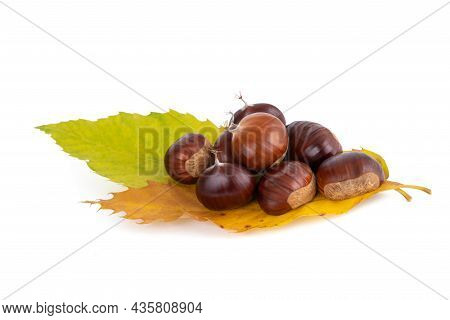Fresh Sweet Chestnuts With Leaves Isolated On White