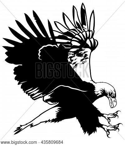 Flying Bald Eagle Drawing - Black Illustration Isolated On White Background, Vector