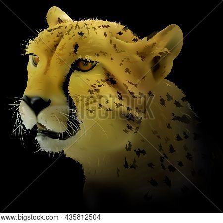 Cheetah On Black Background - Detailed And Realistic Illustration Isolated On Black Background, Vect