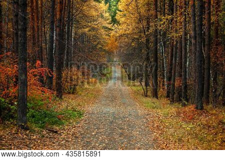 Beautiful alley in the autumn forest