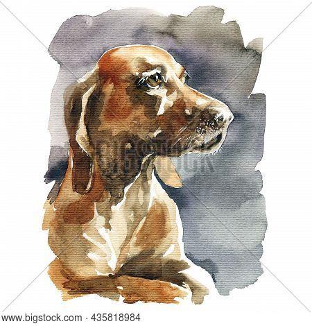 Watercolor Illustration - Portrait Of Brown Basset Hound Dog, Hand Drawn Sketch On White Background