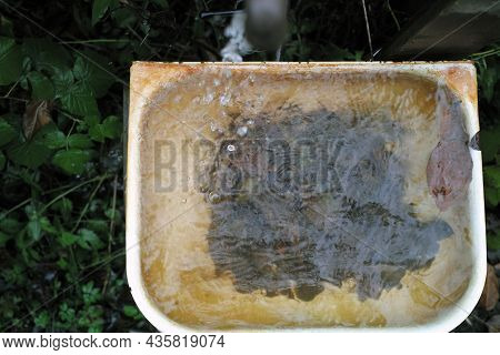 An Old Sink Full Of Water With Clogged Drain Hole, Overhead View,