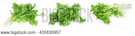 Fresh Green Leaves Of Endive Frisee Chicory Salad Isolated On White Background With Full Depth Of Fi
