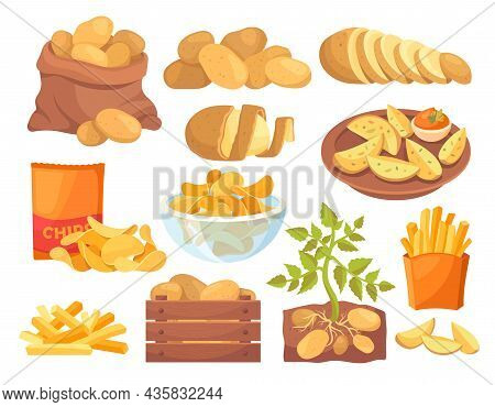 Set Of Potatoes Products Icons. French Fries, Country Potatoes, Different Cooking Methods. Delicious