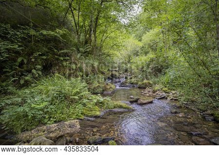 A Small River Flows Quietly Through A Rocky Riverbed In A Lush Forest Among Vegetation And Ferns, Ro