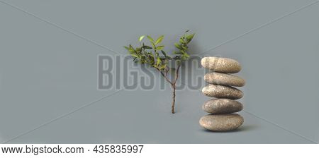 Zen Stones And Green Branch  On Gray Background. Zen Meditation, Harmony. Close-up, Creative Copy Sp