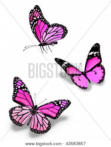 Three Violet Pink Butterflies, Isolated On White