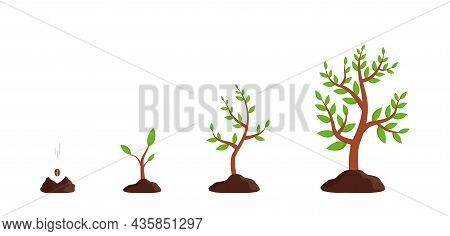 Plant Growth From Seed To Tree. Sprout Grow In Soil. Icon Of Process Germination Of Sapling. Seedlin