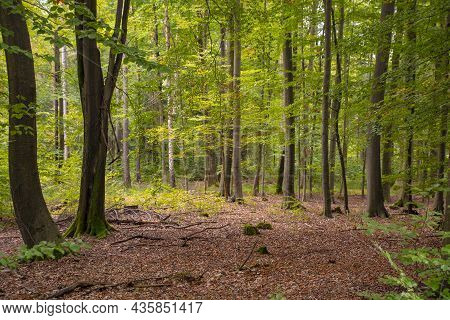 Fall Forest Landscape. Dry Fall Leaves Covering The Ground And Forest Trees Under Soft Sunlight. Col