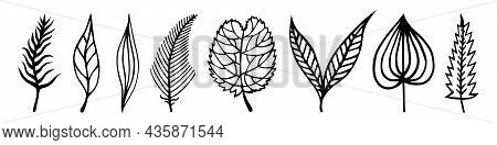 Leaves Of Trees Vector Set. Hand-drawn Doodles. Black Silhouettes Of Veined Leaves. Monochrome Natur