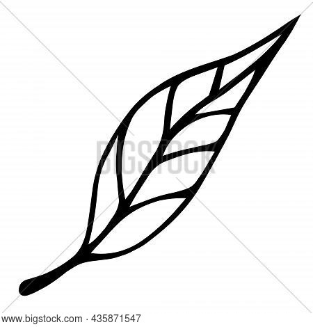 Tree Leaf Vector Icon. Hand-drawn Simple Doodle. Autumn Leaf Of Birch With Veins. Botanical Sketch.