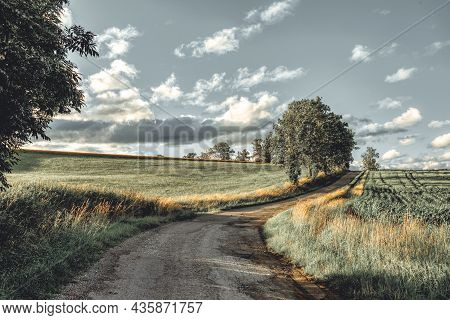 Asphalt Road In The Countryside. Yellow Wheat Field In July. Agricultural Concept, Landscape In High