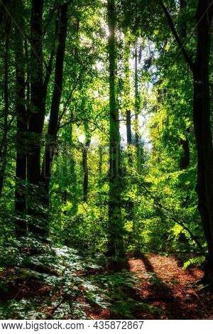 Beautiful scenery of a sunny forest during autumn in Poland