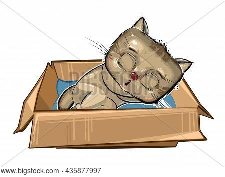 The Kitten Sleeps In A Cardboard Box. A Pet As A Gift Or A Homeless Person. Childrens Illustration.