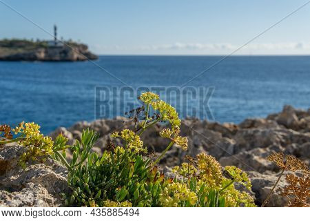 Close-up Of The Mediterranean Sea Fennel Plant, Crithmum Maritimum, With The Mediterranean Sea And T
