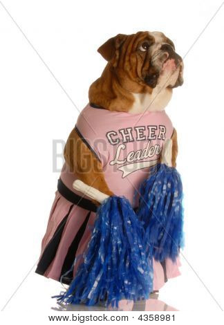 english bulldog dressed up as a cheerleader poster