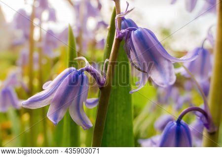 Vigorous Purple Flower In The Morning Light