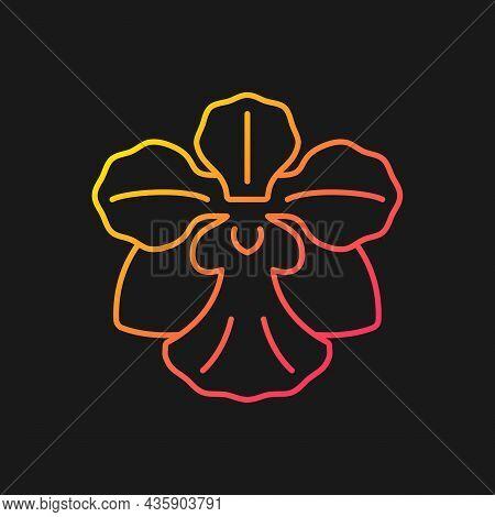 Vanda Miss Joaquim Gradient Vector Icon For Dark Theme. Singaporean National Flower. Plant Hybrid. S