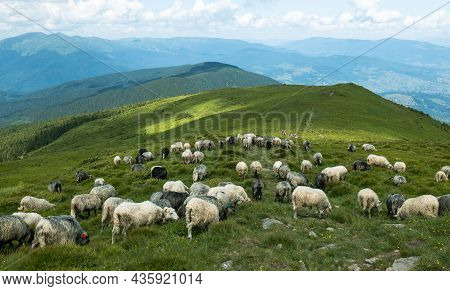 A Herd Of White Sheep In The Mountains. Beautiful Mountain Landscape View.