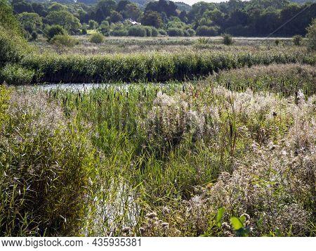 Wetland Habitat At Staveley Nature Reserve, North Yorkshire, England