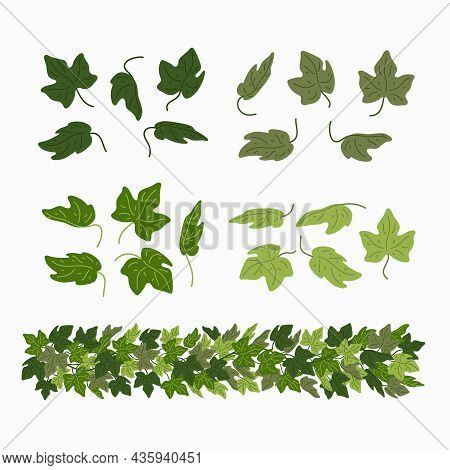 Ivy Leaves, And Green Liana Border, Isolated On White Background. Vector Illustration In Flat Cartoo