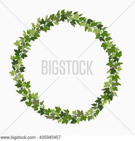Ivy Wreath, Green Creeper Circle Frame Isolated On White Background. Vector Illustration In Flat Car