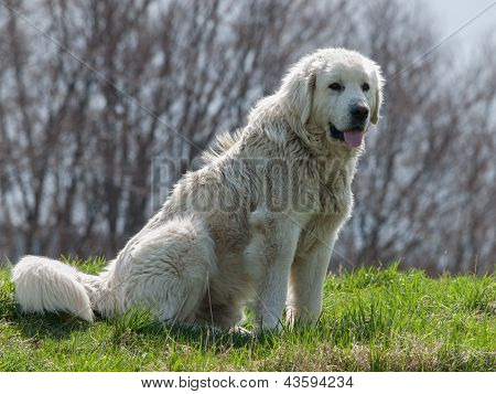 Portrait Of A Dog On The Meadow