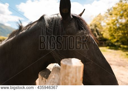A Black Lonely Horse Stands On A Paddock