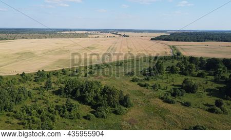 Small Green Grove, Aerial View. Trees In A Young Forest, Landscape.