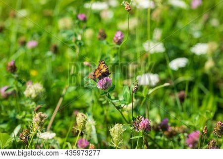 Spring Meadow With Flowers On Which Are Insects And Small Butterflies.