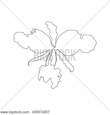 Orchid Flower In Continuous Line Art Drawing Style. Beautiful Cattleya Flowering Plant Black Linear