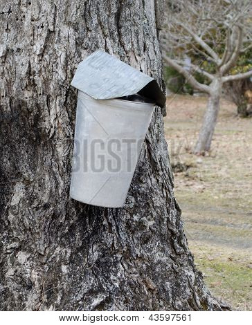 Single maple tree sap metal collection container