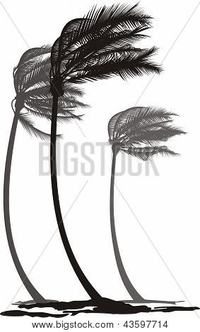 Palms In The Wind.eps