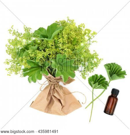 Ladys mantle herb with essential oil. Herbal plant medicine to treat   menstrual and menopausal problems, is an anti inflammatory and astringent also used for skin care problems. On white.