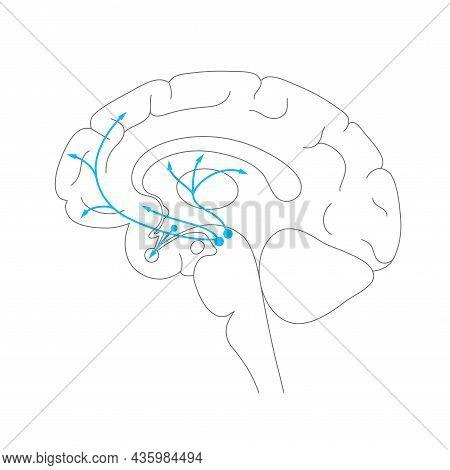 Dopamine Pathway In The Human Brain. Monoamine Neurotransmitter. Motivational Component Of Reward Mo