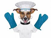 a cook chef dog with oven mitts poster
