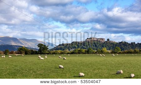 A view of sheep grazing with Stirling Castle in the distance. Stirling, Scotland