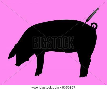 Swine Gets An Inoculation Because Of Swine Flu
