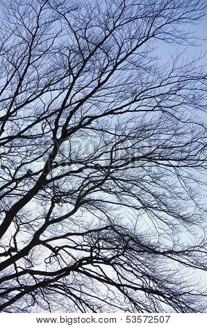 Mighty Treetop