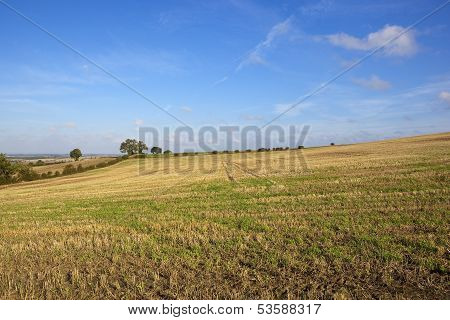 Hillside Harvest