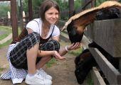 Little teen girl feeding goats on farm poster