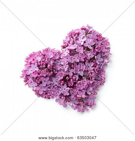 Flowers of a lilac in the form of a heart
