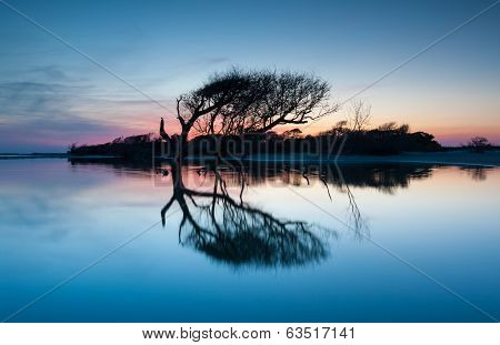 Tree Silhouette Folly Beach Charleston South Carolina