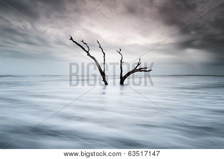 Folly Beach Charleston South Carolina Ominous Clouds Dead Tree
