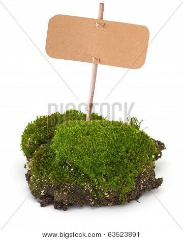 Fresh piece of moss with tag isolated on white background. Element for design. poster