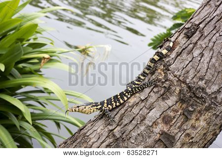 lizard climbing on green tree near pool poster