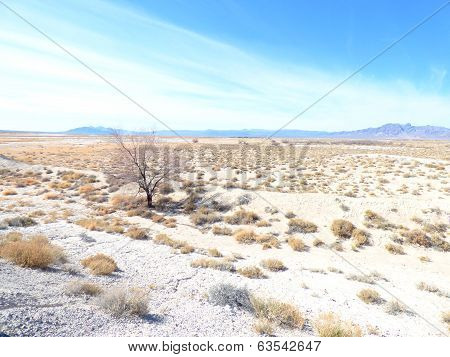 Lonely Tree in Barren White Sand Desert