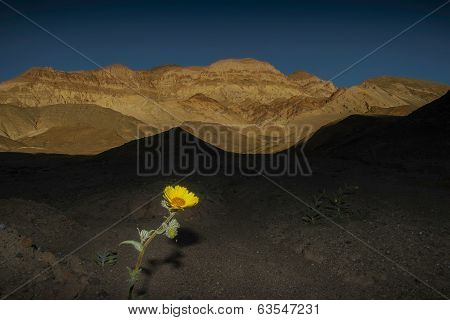 Flower, Death Valley