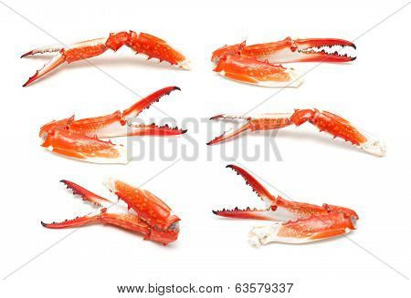 Crab claw isolated